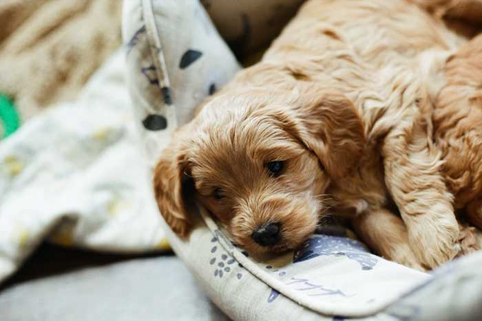How To Choose The Perfect Name For Your New Puppy